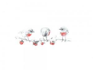 3 roodborstjes voor illustratemyday