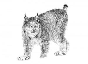 Lynx online