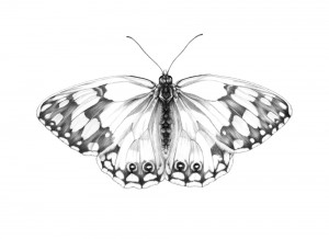 Butterfly 5 Habiba Doorenbos